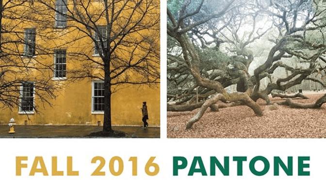 Falling for</br><span> Pantone</span>